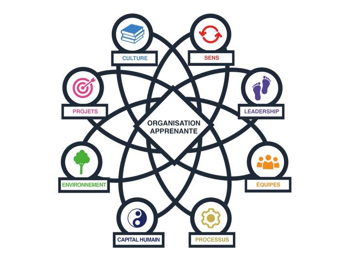 L'organisation apprenante : clef de l'agilité dans un monde instable